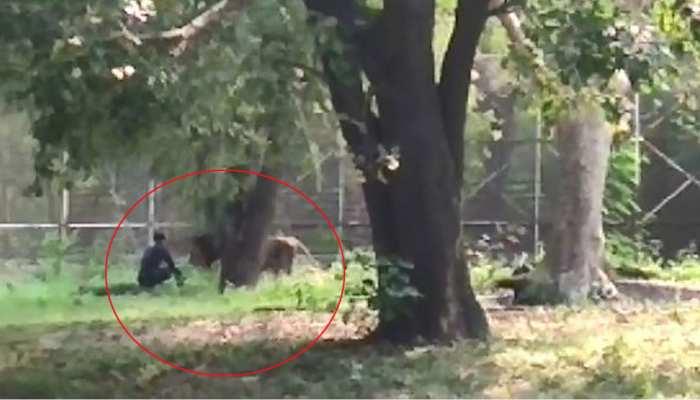 Watch Video: ದೆಹಲಿ ಮೃಗಾಲಯದಲ್ಲಿ ಸಿಂಹ ಇದ್ದ ಸ್ಥಳಕ್ಕೆ ಜಿಗಿದು ಕುಳಿತ ಯುವಕ! ಮುಂದೆ ಆಗಿದ್ದೇನು?