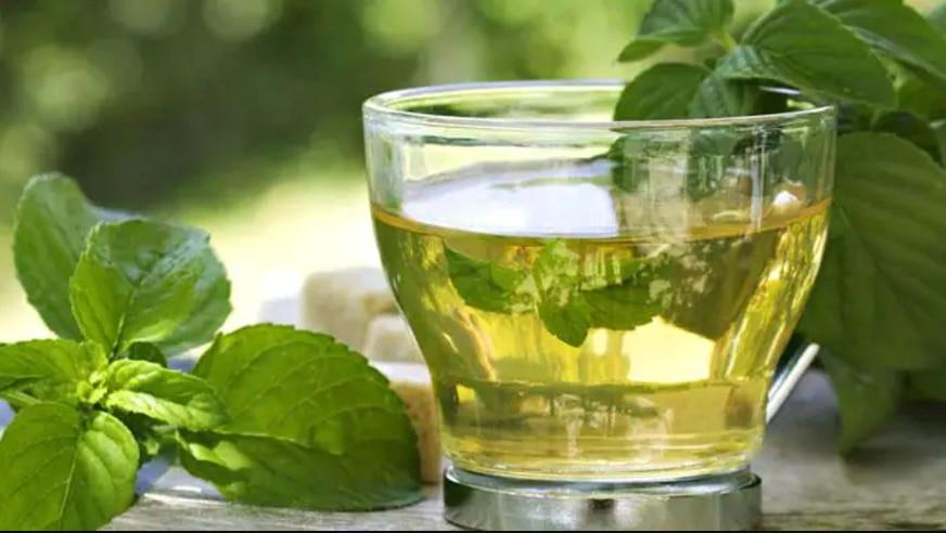 ದಿನಕ್ಕೆ ಎಷ್ಟು ಕಪ್ Green Tea ಕುಡಿಯಬೇಕು? ಕುಡಿಯಲು ಸರಿಯಾದ ಸಮಯ ಯಾವುದು? ಇಲ್ಲಿ ತಿಳಿಯಿರಿ