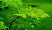 Health Tips : ಏಳು ಮಹಾರೋಗಕ್ಕೆ ರಾಮಬಾಣ ಈ ನುಗ್ಗೆ ಸೊಪ್ಪು..!