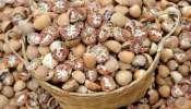 Arecanut Price: ರಾಜ್ಯದ ಮಾರುಕಟ್ಟೆಗಳಲ್ಲಿ ಇಂದಿನ ಅಡಿಕೆ ಧಾರಣೆ ಎಷ್ಟಿದೆ ನೋಡಿ..?