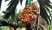 Arecanut Price: ರಾಜ್ಯದ ವಿವಿಧ ಮಾರುಕಟ್ಟೆಗಳಲ್ಲಿ ಇಂದು ಅಡಿಕೆ ಬೆಲೆ ಎಷ್ಟಿದೆ ನೋಡಿ