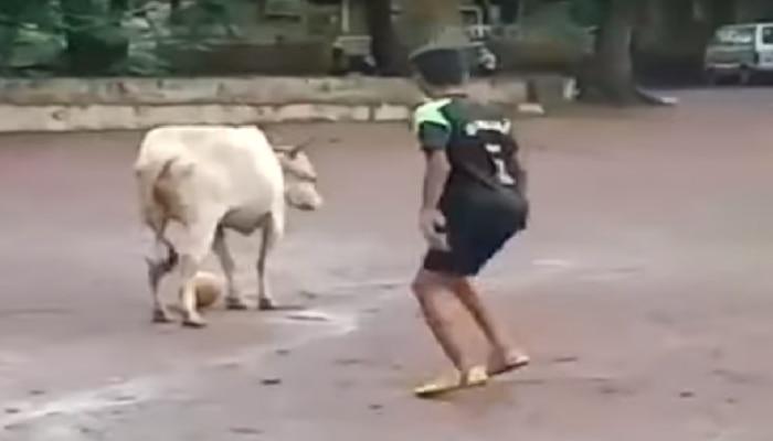 Viral Video: ಯುವಕರೊಂದಿಗೆ ಗೂಳಿ ಫುಟ್ಬಾಲ್ ಆಡಿದ್ದು ಹೇಗೆ ಗೊತ್ತಾ?