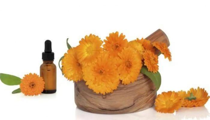 ಹಲವು ರೋಗಗಳಿಗೆ ರಾಮಬಾಣ ಚಿಕಿತ್ಸೆ Marigold Flower, ಇಲ್ಲಿವೆ 10 ಲಾಭಗಳು