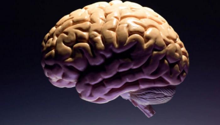 Brain Myths : ಇದು ನಮ್ಮ ಸೂಪರ್ ಹೀರೋ ಮೆದುಳಿನ ಬಗ್ಗೆ ಹೇಳಲಾದ ಮಹಾಸುಳ್ಳು..!