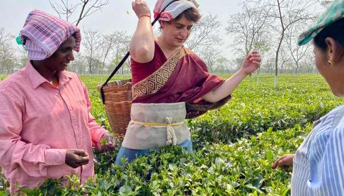 Priyanka Gandhi: ಪ್ರಿಯಾಂಕಾ ಗಾಂಧಿಗೆ ಟೀ ಎಸ್ಟೇಟ್ನಲ್ಲಿ ಕೆಲಸ! ವೈರಲ್ ಆಯ್ತು ವಿಡಿಯೋ