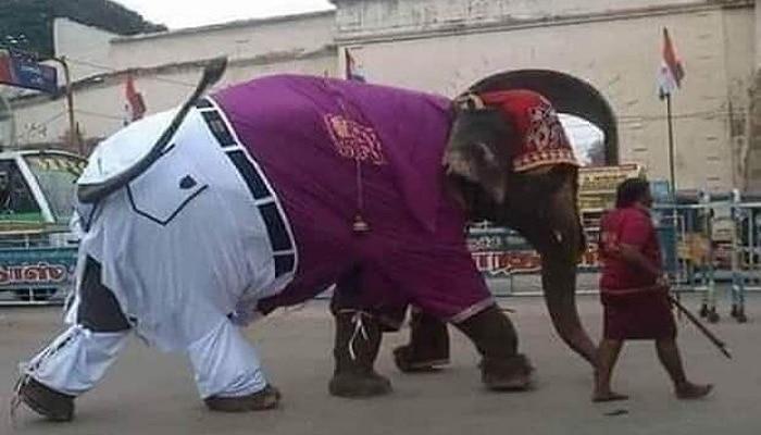 Viral Photo: ಶರ್ಟ್-ಪ್ಯಾಂಟ್ ಧರಿಸಿ, ತಲೆಗೆ ರುಮಾಲು ಸುತ್ತಿ, ಟಕ್ ನಲ್ಲಿ ಬೀದಿಗಿಳಿದ ಗಜರಾಜನ ಗಾಂಭೀರ್ಯ ನಡೆ