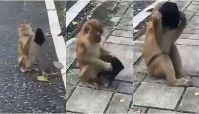 Viral Video: ರಸ್ತೆಯಲ್ಲಿ ಸಿಕ್ಕ ಮಾಸ್ಕ್ ಹಾಕಿಕೊಂಡ 'ಮಂಗ'ನಾಟ ನೋಡಿ..!